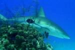 shark_final